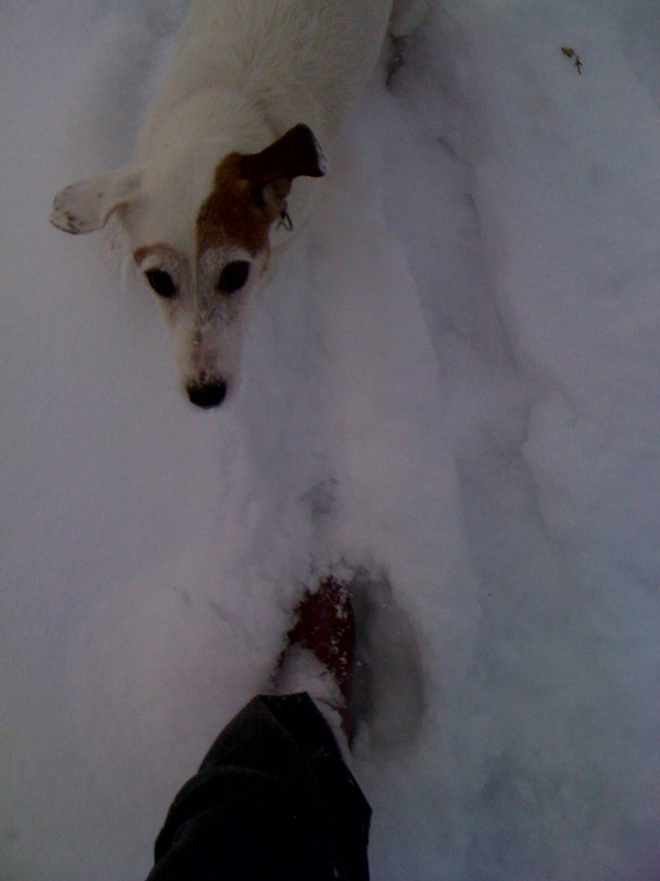 雪中トレーニング